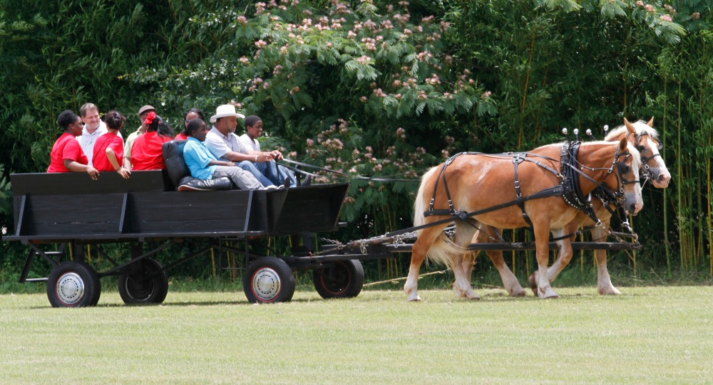 Horse & Waggon 2-facing right